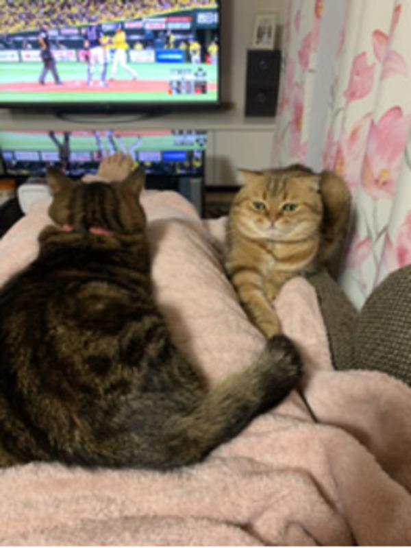 休みの日は猫と一緒に映画鑑賞